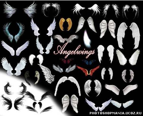 Количество 38 пар крыльев